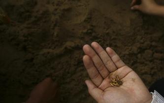 泰國舉行春耕播種儀式