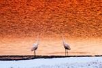 親近青海湖,感受生靈之美