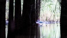 雲南昆明:到撈魚河濕地公園親近自然