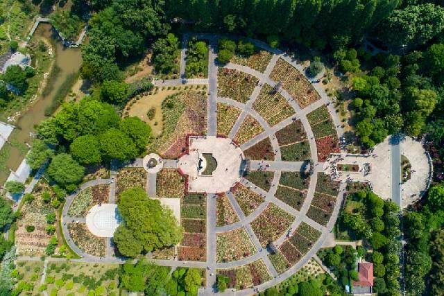 鳥瞰武漢青山和平公園月季花園 花海似巨型調色盤