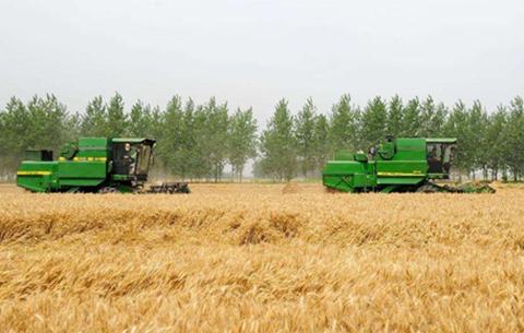 安徽4000多萬畝小麥即將開鐮 今年夏糧收成怎麼看?