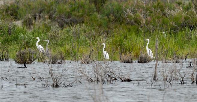 新疆烏倫古湖:鷗鳥翔集