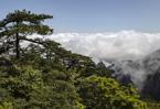安徽黃山:山巒滴翠 雲煙競秀