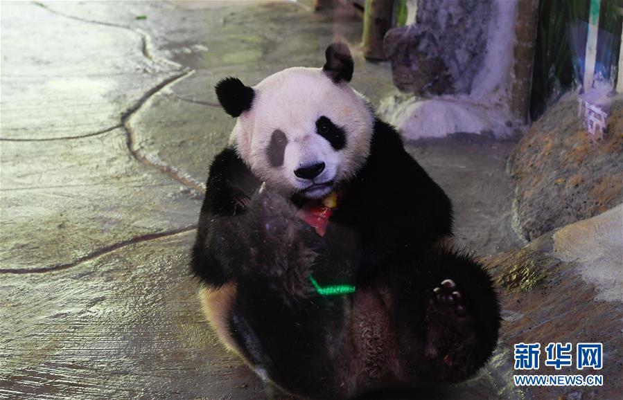 """熊貓吃""""冰蛋糕""""老虎泡遊泳池"""