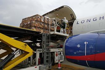 1500只食蟹獼猴包機赴海口 安全降落美蘭機場