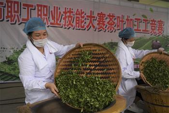 廣西玉林:炒茶葉 賽技能
