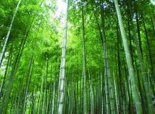 """貴州:綠色産業""""竹""""助農增收推動鄉村振興發展"""