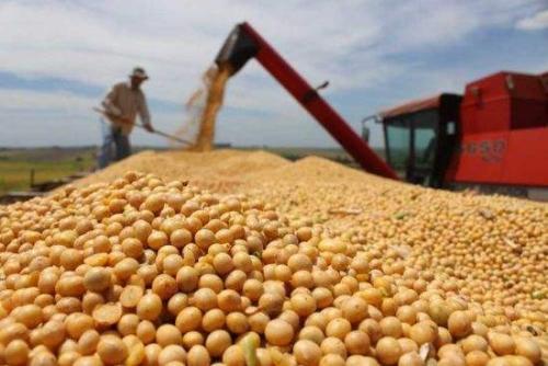 今年糧食有望再獲豐收 預計大豆面積增加1千萬畝
