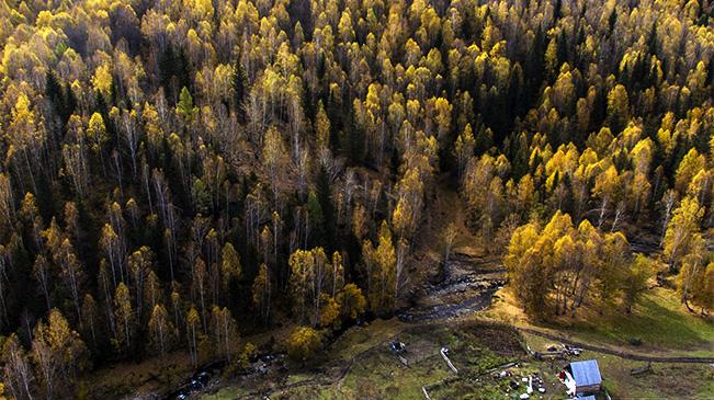 喀納斯:秋景如畫引客來