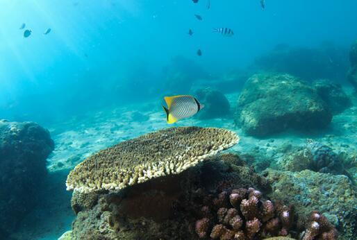 五彩斑斕的水下世界