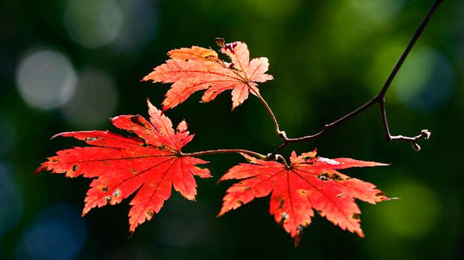 【和你遇見】來吉林省,約會油畫般的秋!
