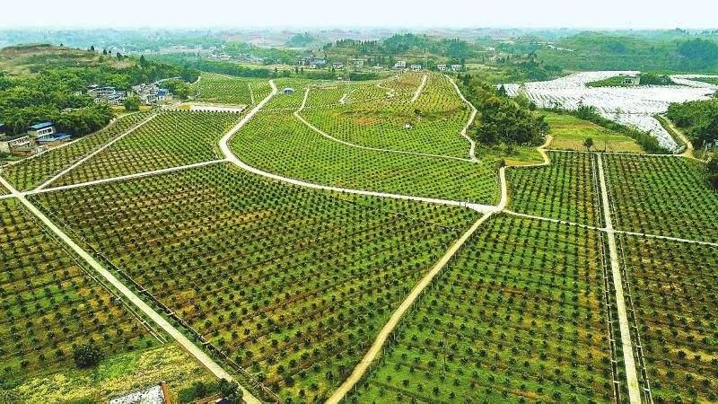 國社@四川 四川力爭2022年全省超三分之一農戶加入農民合作社