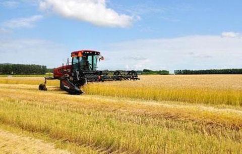 安徽省托市收購小麥514萬噸 促農增收超10億元