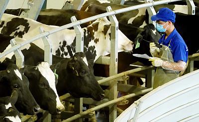生鮮乳中國農墾乳業聯盟團體標準發布