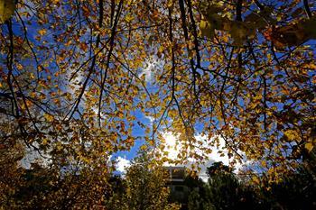 黎巴嫩山間秋日