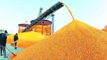 吉林省收購新糧超百億斤