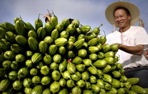 三亞冬季瓜菜進入産銷旺季 日均出島突破3000噸