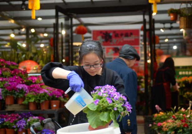 湖南長沙:購花卉 迎新年