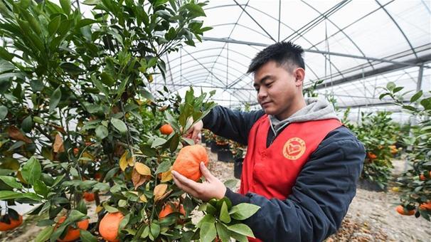 黨員志願者助農增收