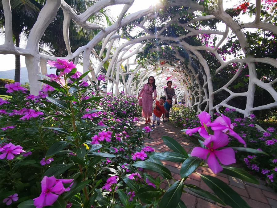 海南三亞:鮮花盛開引客來