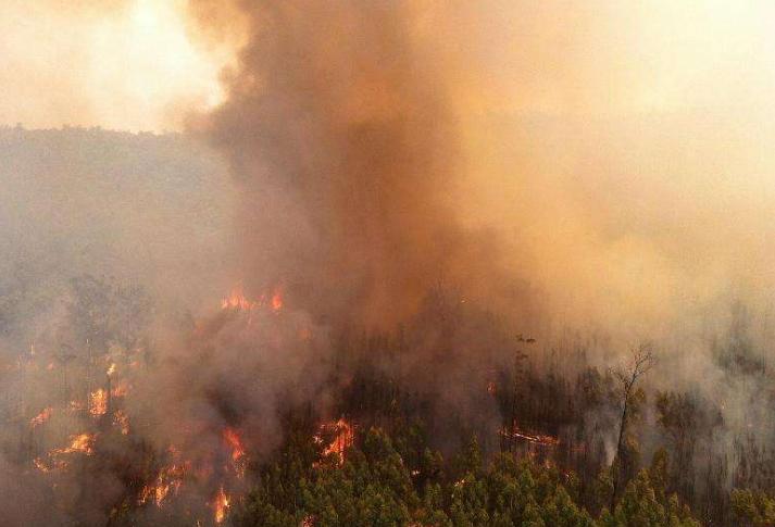 澳七成以上民眾受山火影響