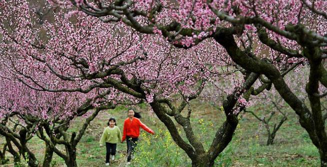 陜西洋縣:柳山湖畔桃花紅