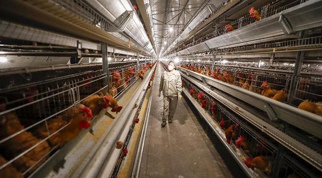 重慶長壽:多措並舉保障農業企業復工穩産