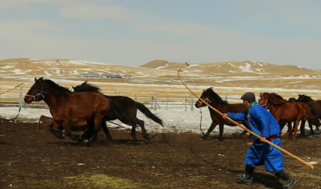 內蒙古首支馬背警隊:警民聯手馴馬忙