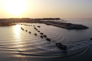 山東榮成:海帶進入收獲季