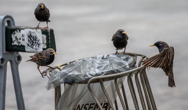 空城巴黎:小鳥上街 鴨子當道