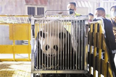 網紅大熊貓安家濱海新區