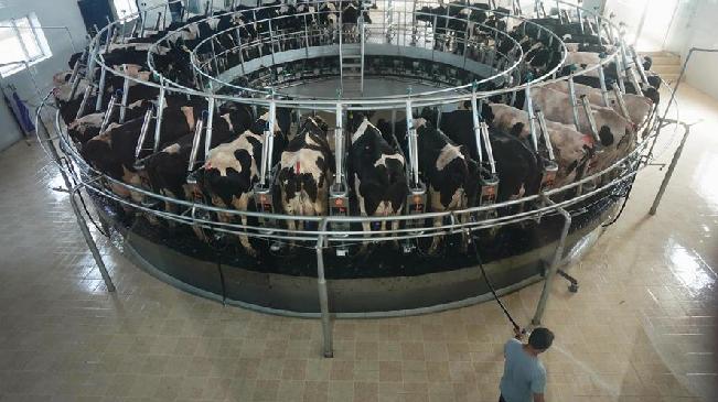 豐潤:發展奶牛養殖助力鄉村振興