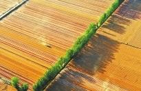 在麥田裏寫下豐收的詩