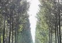 河南國儲林項目獲301億元信貸支持
