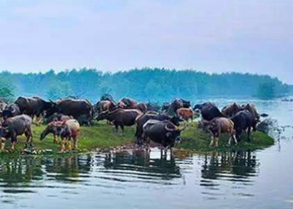 湖南湘陰:橫嶺湖省級自然保護區生態修復紀實