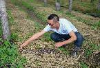 吉林梨樹:林下增收 土地增産