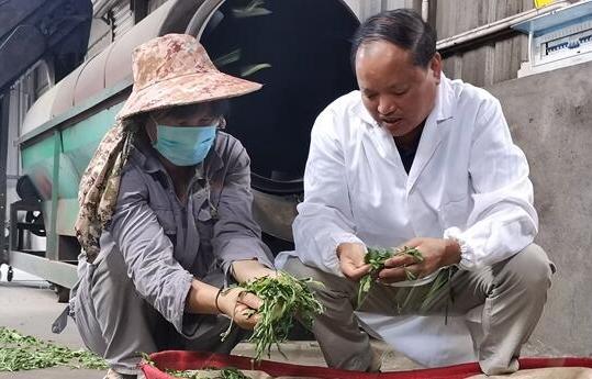 永泰千畝茶園助貧困戶增收致富