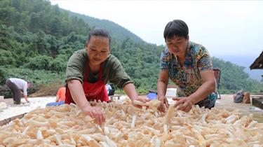 貴州赤水:林下經濟助農增收