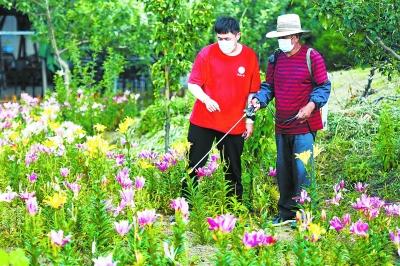 打造百合文化園,建設家庭小菜園,引入農大科技小院