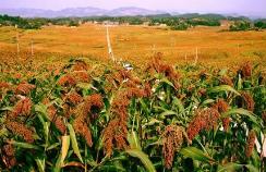 甘肅省特色農業産業發展勢頭良好
