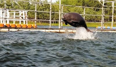 首頭網箱繁育江豚回歸自然水域