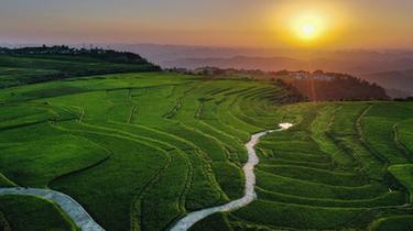 貴州高坡夏日即景