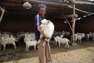 """走向我們的小康生活丨""""扶貧羊""""帶領貧困戶走上""""羊光大道"""""""