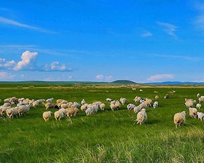 《地理標志産品 鹽池灘羊》新版地方標準正式發布