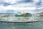 鮭鱒魚産業:扎根青海放異彩