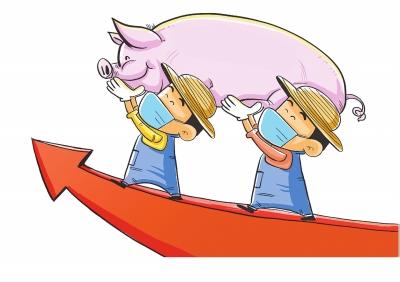 連續11個月正增長 河南省生豬存欄持續恢復