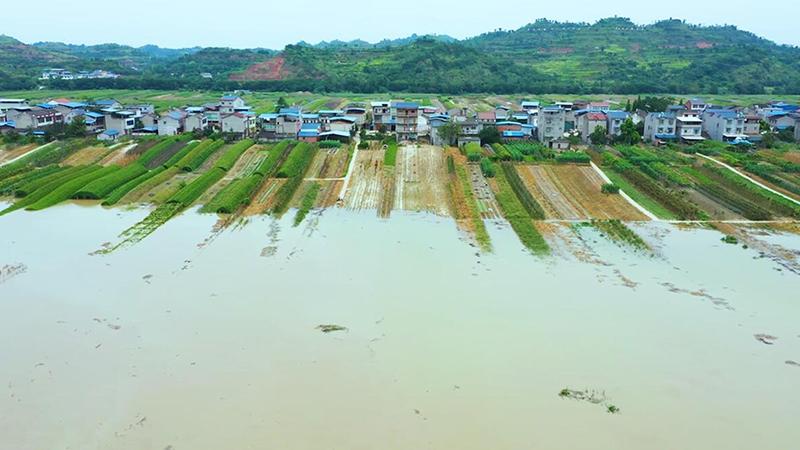 航拍重慶潼南洪峰過境 蔬菜基地受淹