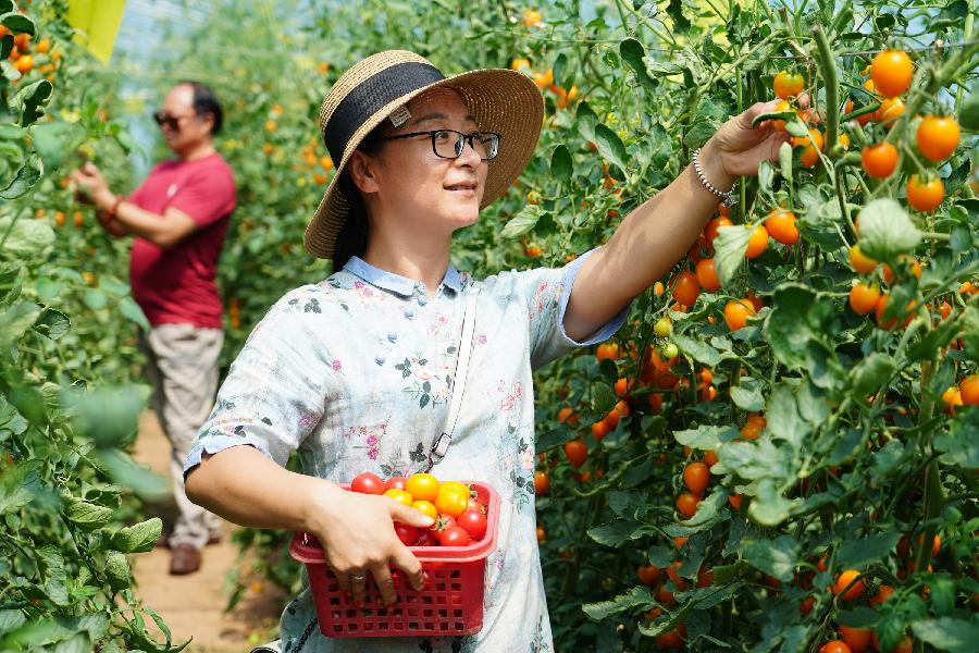黃土高原小村莊 環境優美産業旺
