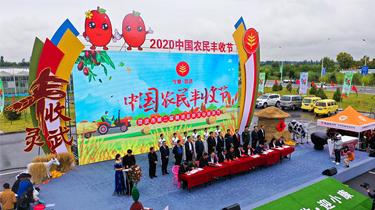 寧夏靈武:農民談笑豐收事