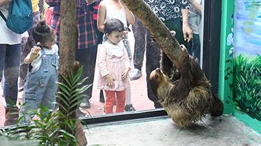 重慶動物園首次引進樹懶和小食蟻獸